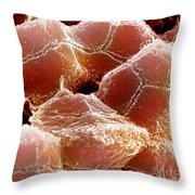 Sem Of Liver Throw Pillow by Science Source