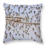 Semipalmated Sandpiper Calidris Pusilla Throw Pillow