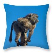 Sentry Baboon Namibia Throw Pillow