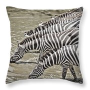 Several Thirsty Zebra Throw Pillow