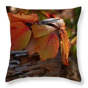 Shade In Fall Throw Pillow