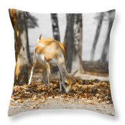 Shaded Grazing Throw Pillow