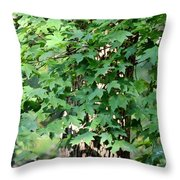 Shadows Of The Sweet Gum Throw Pillow