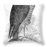Sharp-shinned Hawk Throw Pillow