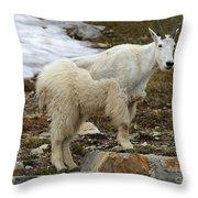 Shedding Mountain Goat Throw Pillow