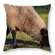 Sheep 3 Throw Pillow