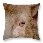 Sheep Close Up Throw Pillow