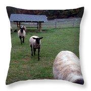 Sheep Feed Time Throw Pillow