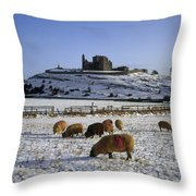 Sheep On A Snow Covered Landscape In Throw Pillow
