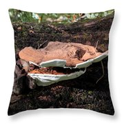 Shelf Mushrooms Throw Pillow