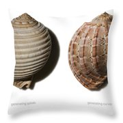 Shell Line Systems Throw Pillow