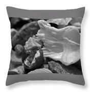 Shells Vi Throw Pillow
