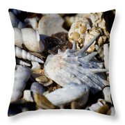 Shelly Beach V2 Throw Pillow