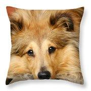 Sheltie Throw Pillow by Kati Molin