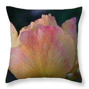 Sherbert Rose Bud Throw Pillow