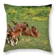 Shetland Pony And Foal Playing Throw Pillow