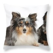 Shetland Sheepdog And Dachshund Throw Pillow