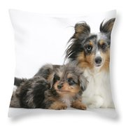 Shetland Sheepdog With Pup Throw Pillow