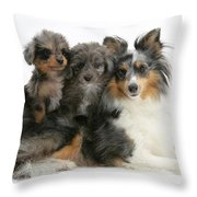 Shetland Sheepdog With Puppies Throw Pillow
