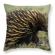 Short-beaked Echidna Tachyglossus Throw Pillow