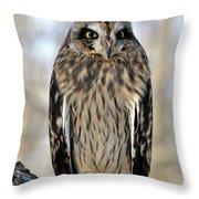 Short-eared Owl Throw Pillow