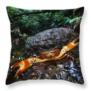 Short-tailed Crab Potamocarcinus Sp Throw Pillow