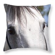 Show Horse At Mule Days Throw Pillow