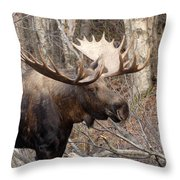 Showing His Rack Throw Pillow