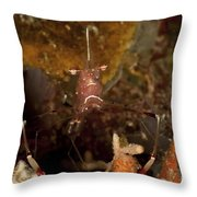 Shrimp With Legs And Claws Spread Wide Throw Pillow