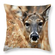 Shy Doe Throw Pillow