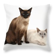 Siamese Cats Throw Pillow