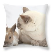 Siamese-cross Cat, Isaac, And Baby Throw Pillow