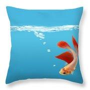 Siamese Fighting Fish Betta Splendens Throw Pillow