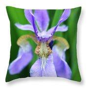 Siberian Iris Flower Throw Pillow