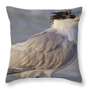 Siesta Key Royal Tern Throw Pillow