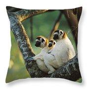 Sifaka Propithecus Sp Family Resting Throw Pillow