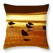 Silver Gulls On Golden Beach Throw Pillow