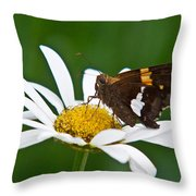 Silver Spotted Skipper 2 Throw Pillow