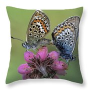 Silver-studded Blue Plebejus Argus Throw Pillow