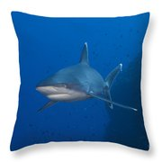 Silvertip Shark, Kimbe Bay, Papua New Throw Pillow