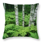 Silvery Birch Bark Gleams From A Bed Throw Pillow