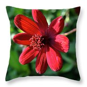 Simply Ruby  Throw Pillow