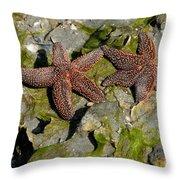 Simply Starfish Throw Pillow