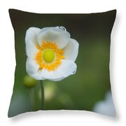 Sinle Dew Drenched Anemone Throw Pillow
