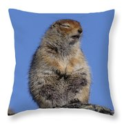 Siting In The Morning Sun Throw Pillow