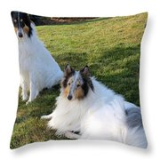 Sitting Pretty Collie Dogs Throw Pillow