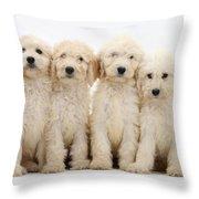 Six Labradoodle Pups Throw Pillow