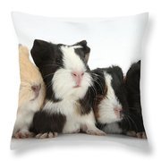 Six Young Guinea Pigs In A Row Throw Pillow