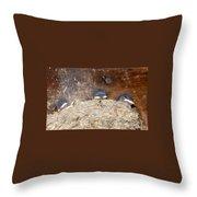 Sleeping Barn Swallows Throw Pillow