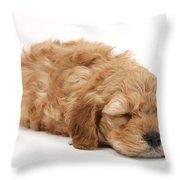 Sleeping Cockerpoo Puppy Throw Pillow